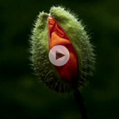 Janine Benyus: Biomimicry in Action - Ted Talks 2009