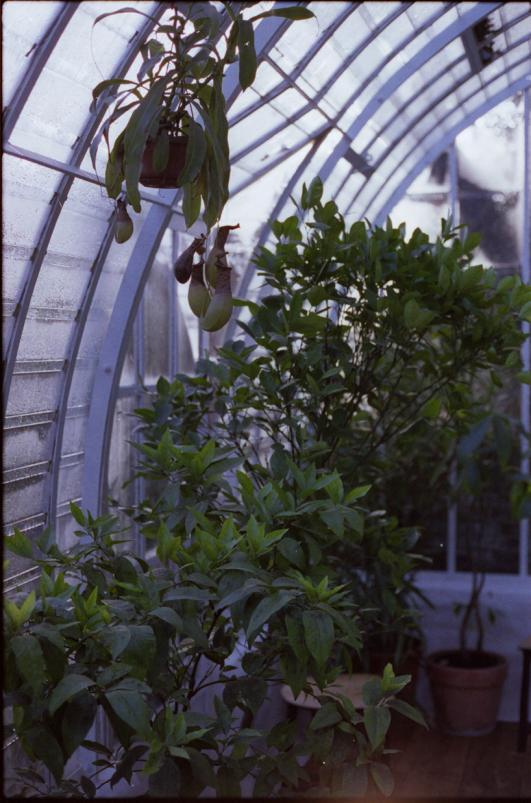 orangerie, detail  [image: JONAS LOELLMANN ]