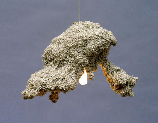 Oswine by Johannes Hemann 2008